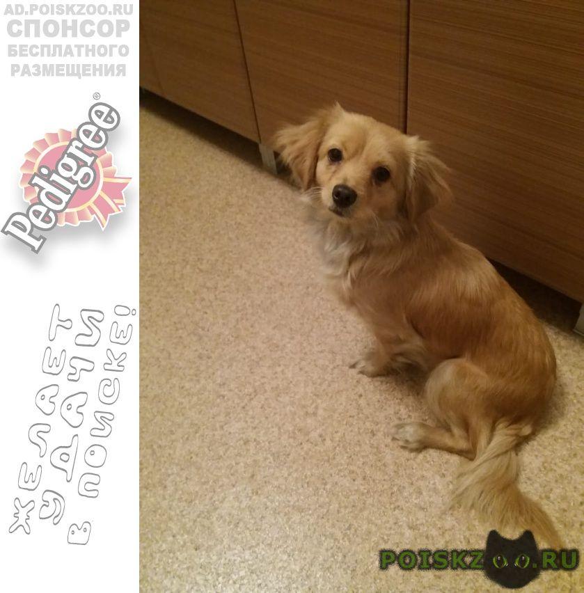 Найдена собака, девочка около жд вокзала г.Нижний Тагил