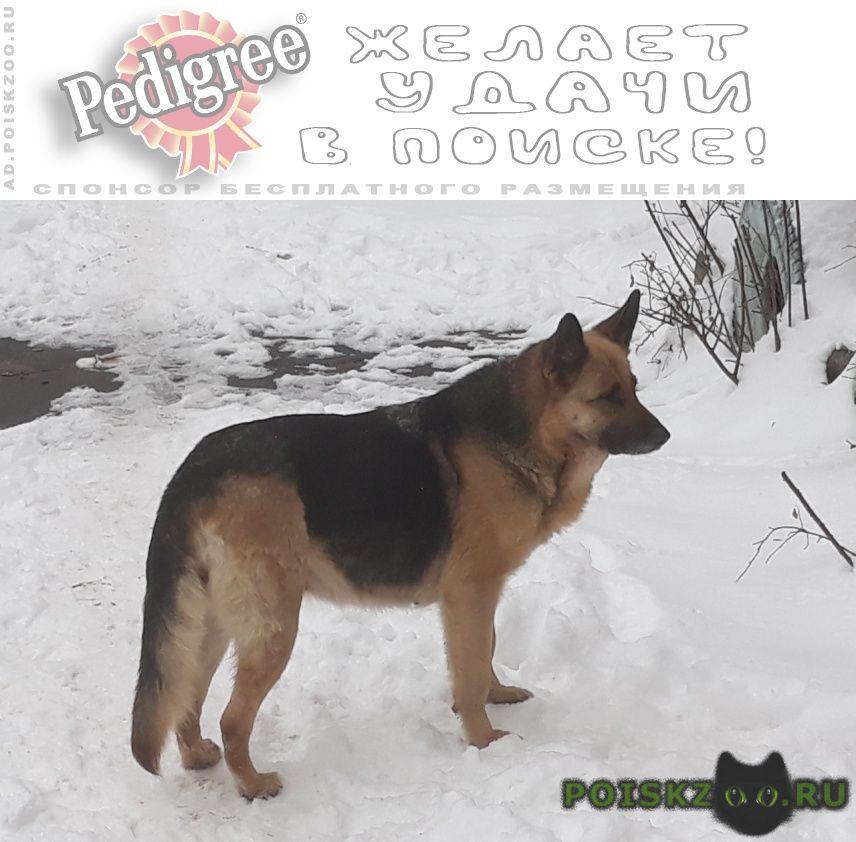 Найдена собака г.Воронеж