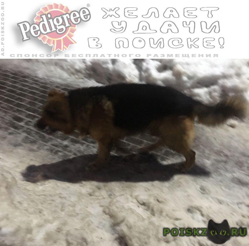 Найдена собака кобель речной вокзал - беломорская пёс г.Москва
