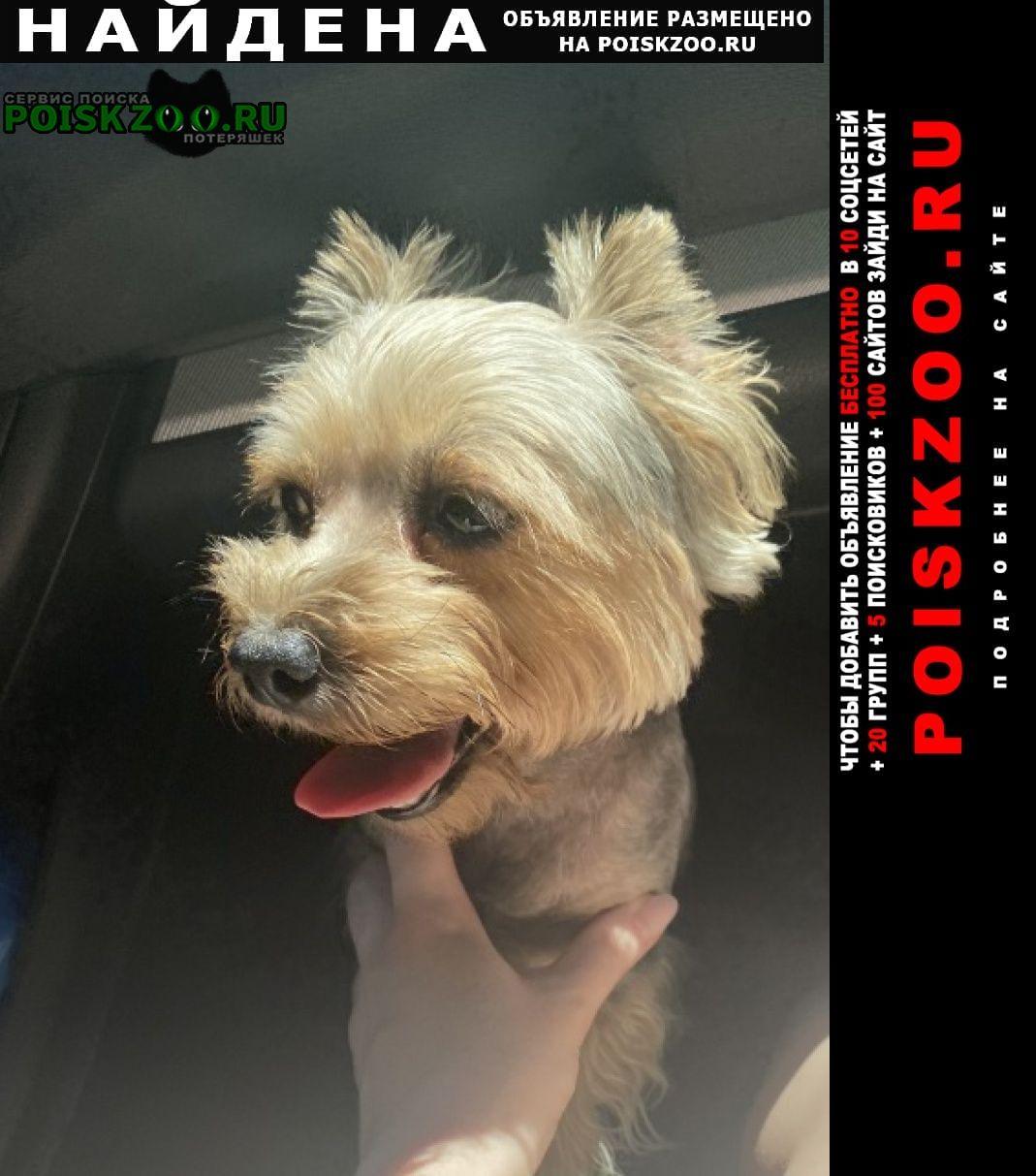 Найдена собака йорк Керчь