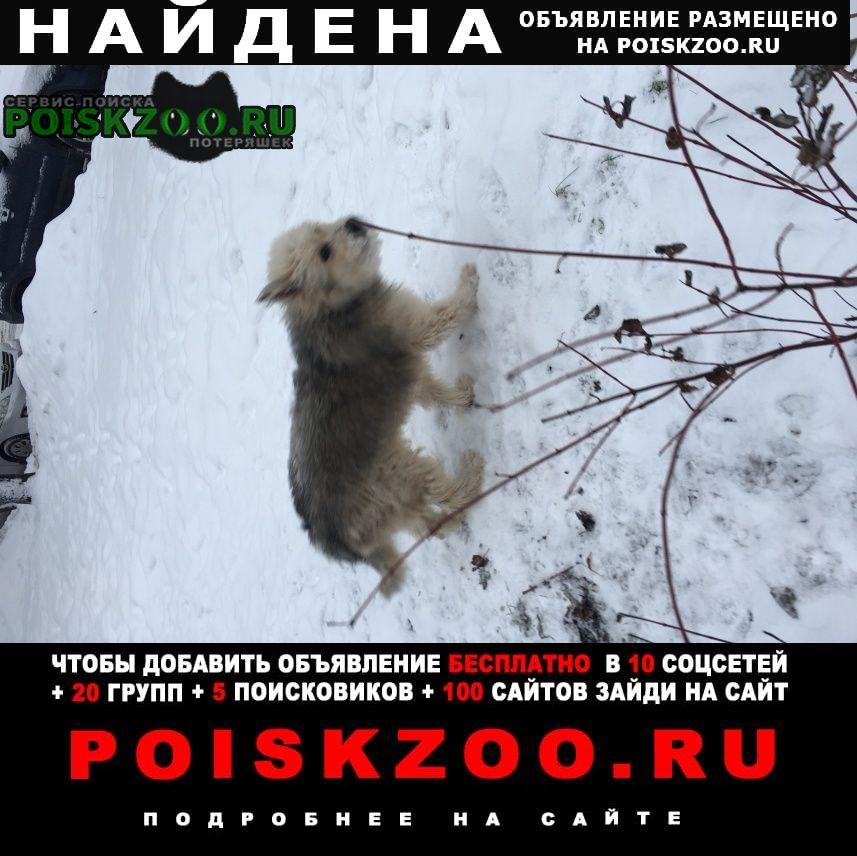 Найдена собака бобтейл Москва