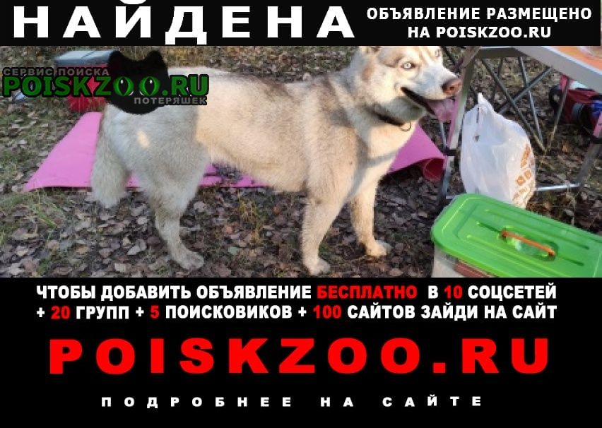 Владимир Найдена собака хаски