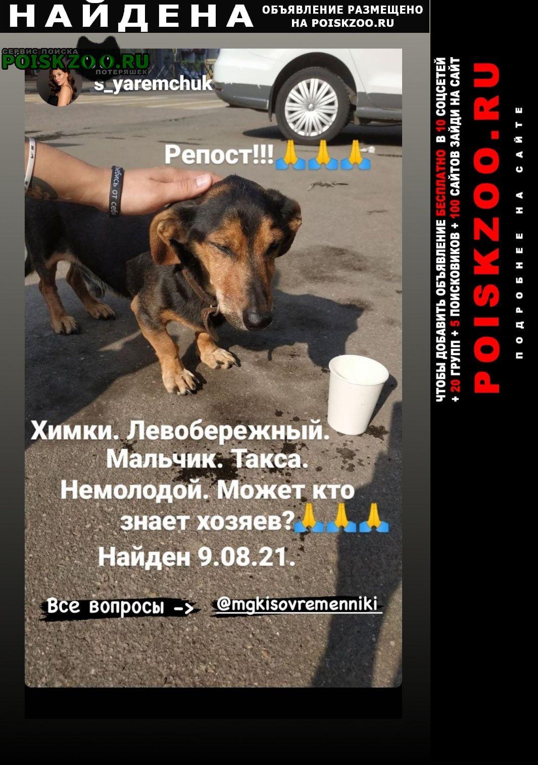 Найдена собака кобель такса Химки