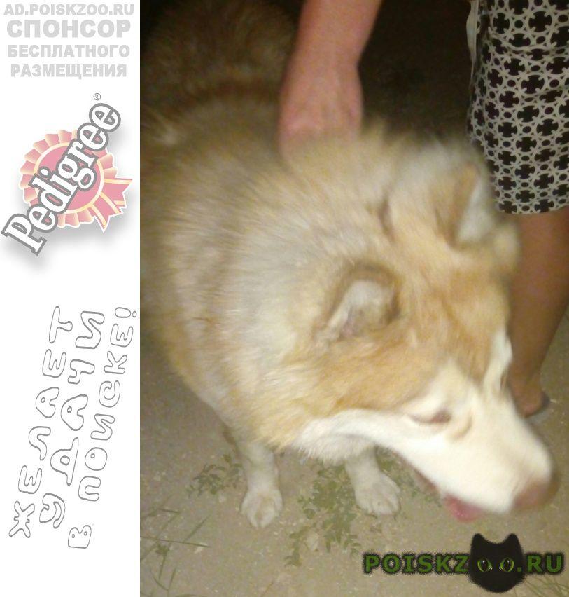 Найдена собака кобель в станице раевская г.Новороссийск