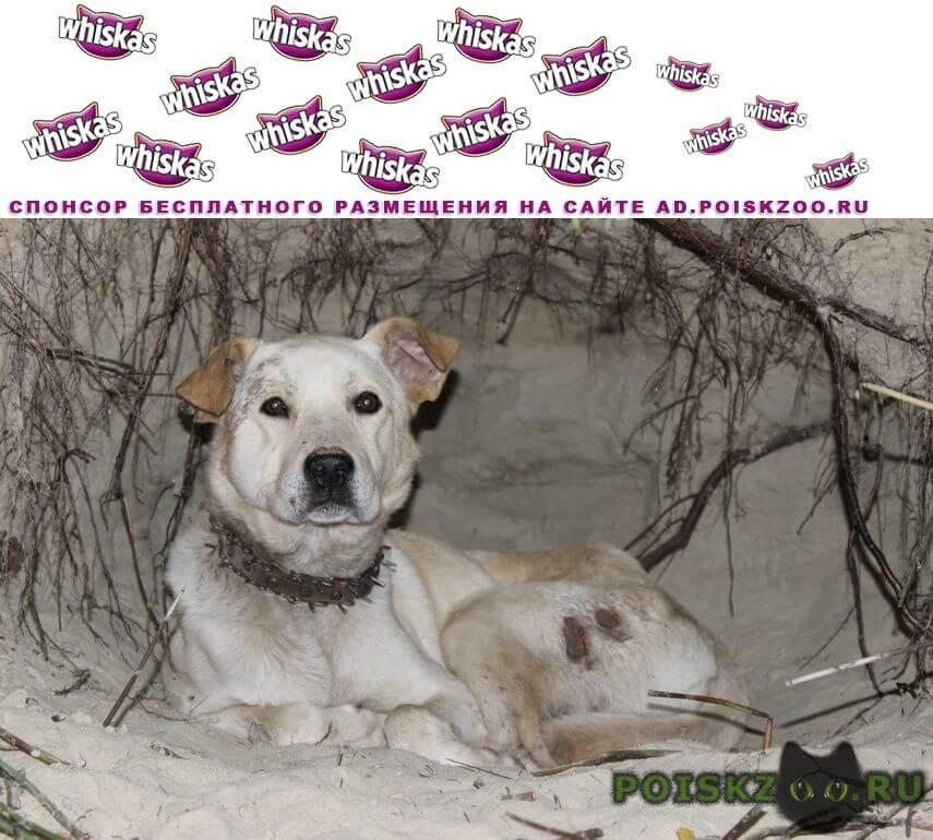 Найдена собака кобель г.Пушкино