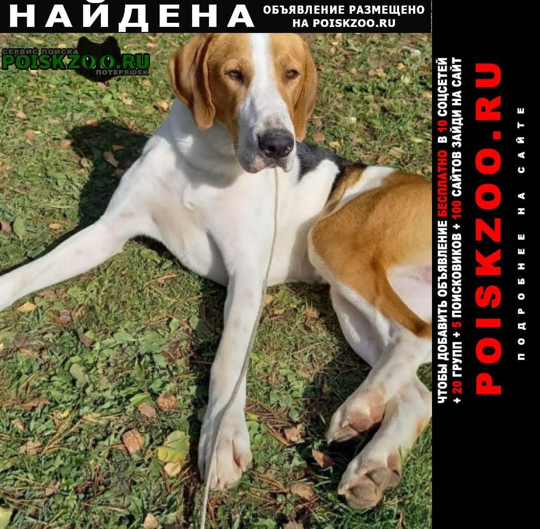 Найдена собака кобель русская пегая гончая, Озеры