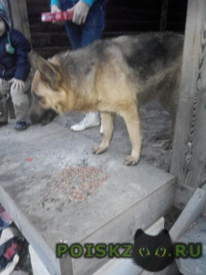 Найдена собака бросили собаку. блинова г.Адлер