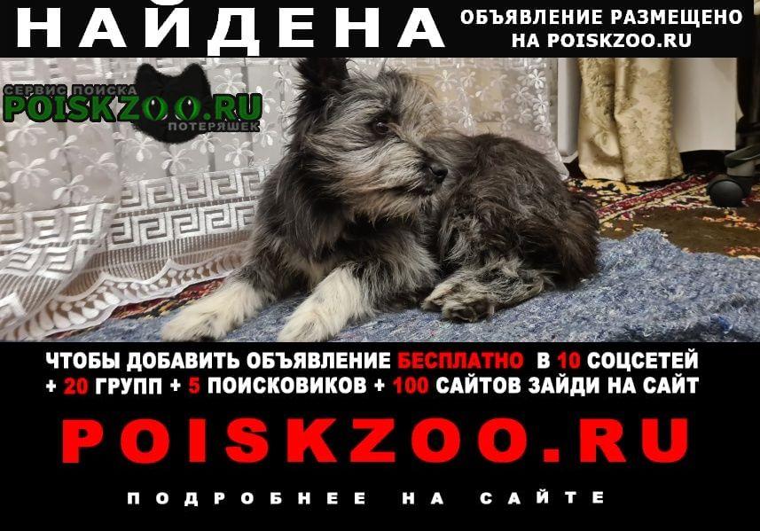 Найдена собака ищет старого или нового хозяина Владикавказ