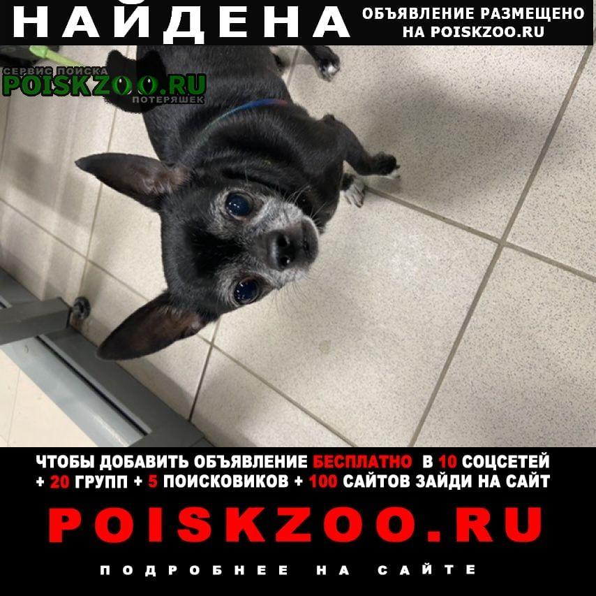 Найдена собака кобель собачка Заречный (Пензенская обл.)