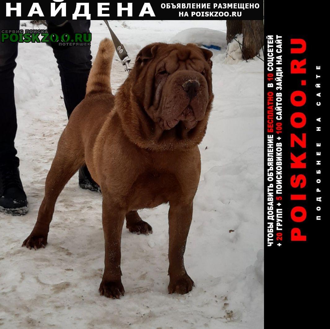 Найдена собака шар-пей Самара
