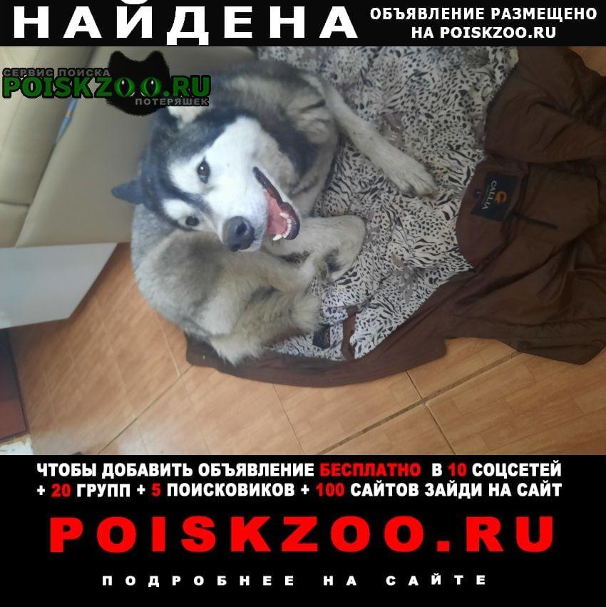Найдена собака хозяин отзовись Пенза