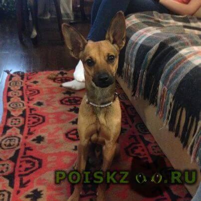 Найдена собака кобель г.Челябинск