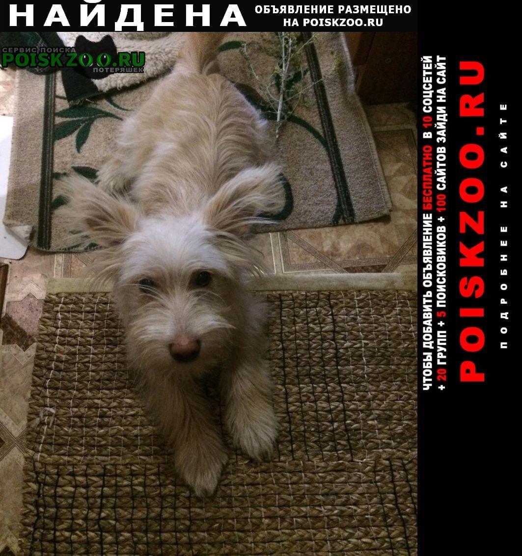 Найдена собака Сергач