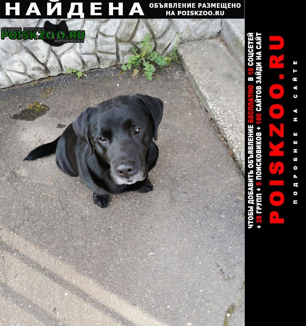 Найдена собака в городе  лабрадор Дедовск