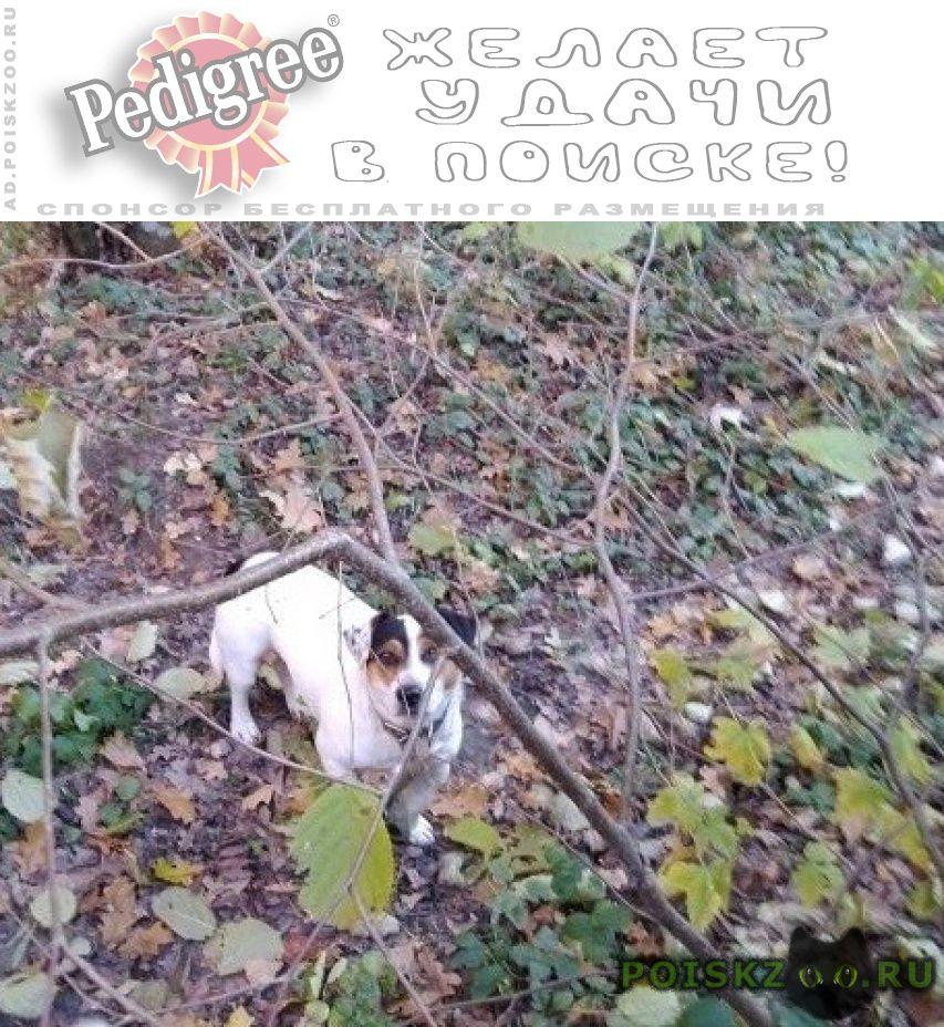 Найдена собака кобель г.Звенигород