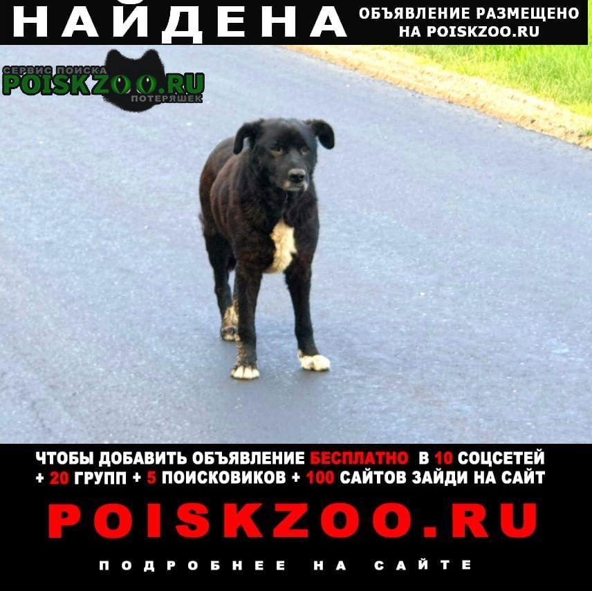 Найдена собака кобель чёрный, не молодой Ступино