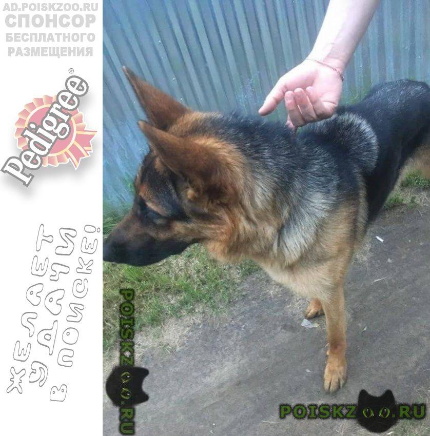 Найдена собака г.Раменское