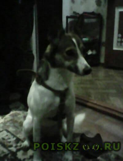 Найдена собака с ошейником и поводком в г.Ростов-на-Дону