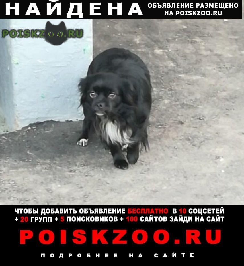 Найдена собака 24.11 пекинес зябликово юао г.Москва