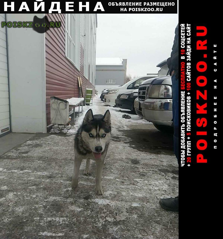 Найдена собака г.Курган