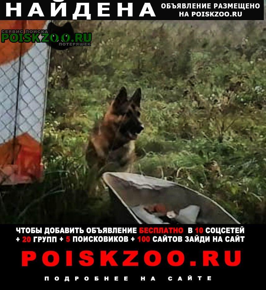 Найдена собака кобель овчарки Калуга