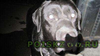 Найдена собака кобель г.Рязань