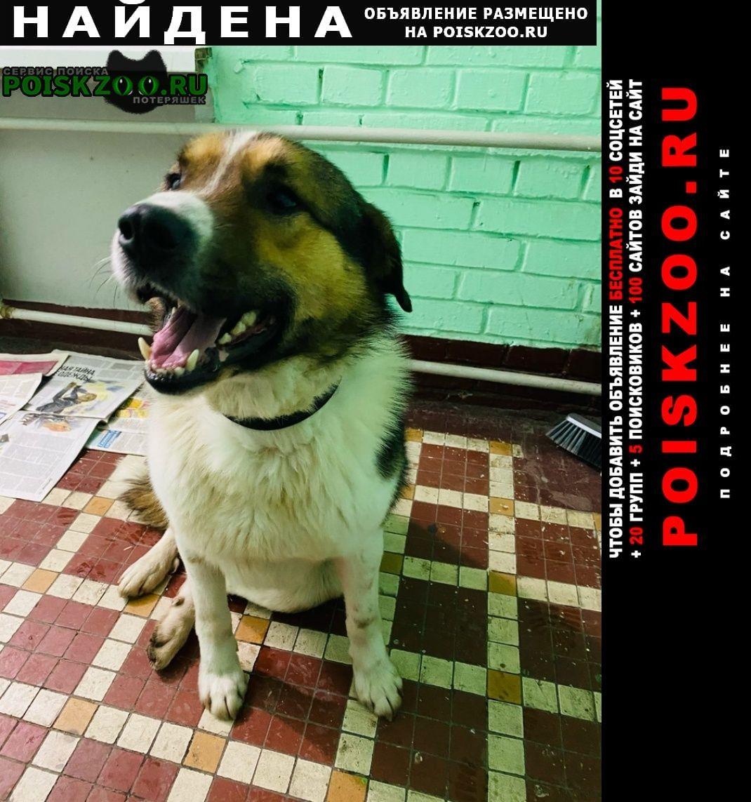 Найдена собака, хлебозаводский проезд Москва