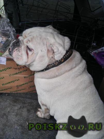 Найдена собака кобель г.Саратов