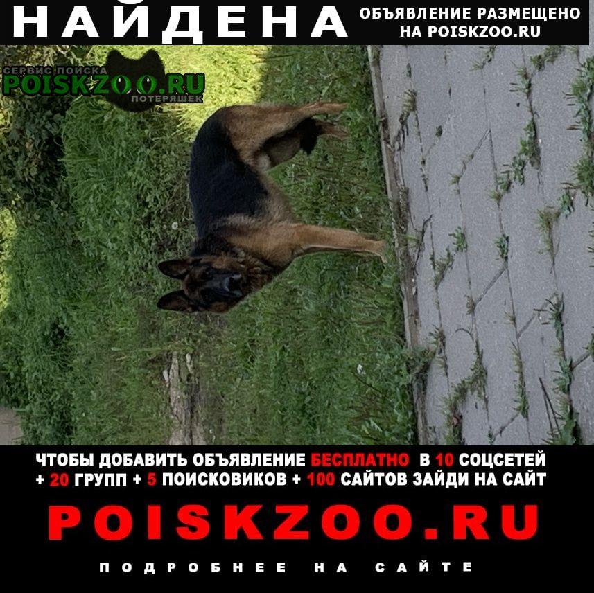 Найдена собака кобель Дмитров