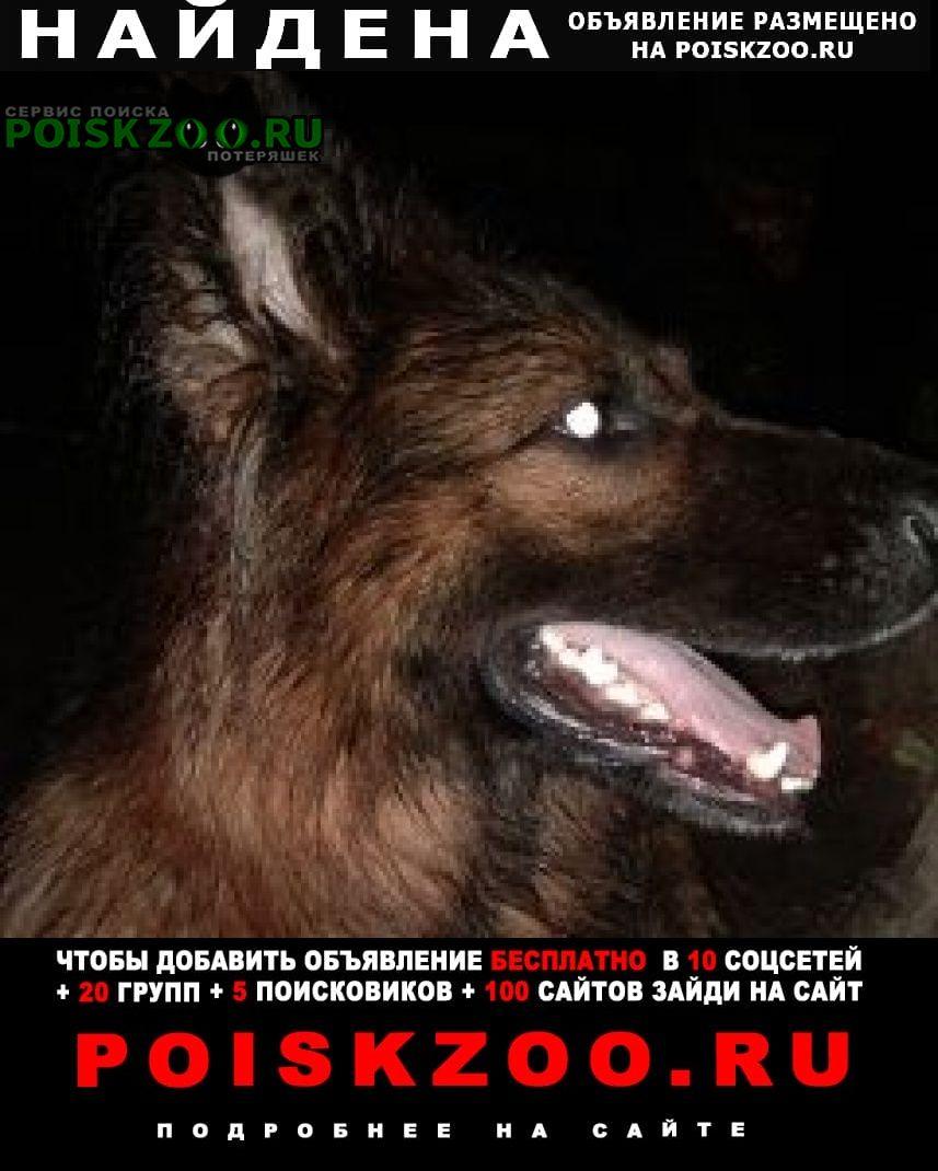 Найдена собака на немецкая овч сука длиношорстная г.Балашиха