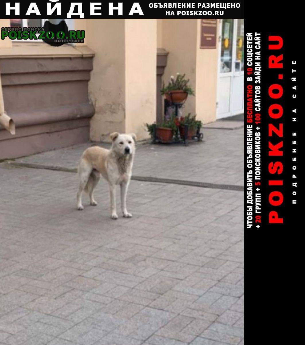Найдена собака белый лабрадор в центре Иркутск