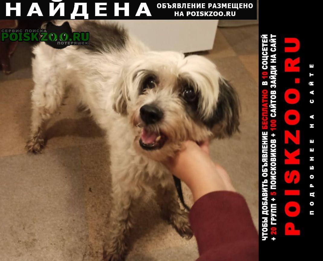 Найдена собака кобель Быково (Московская обл.)