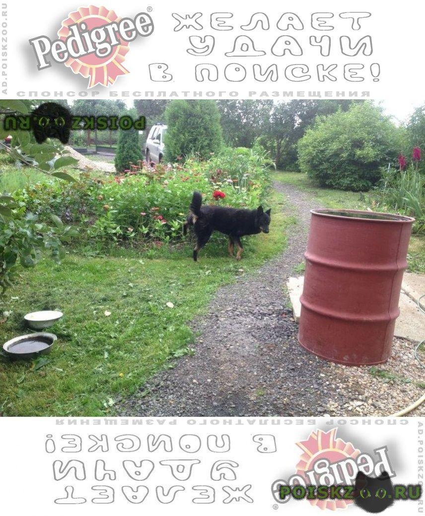 Найдена собака кобель помогу информационно  г.Внуково