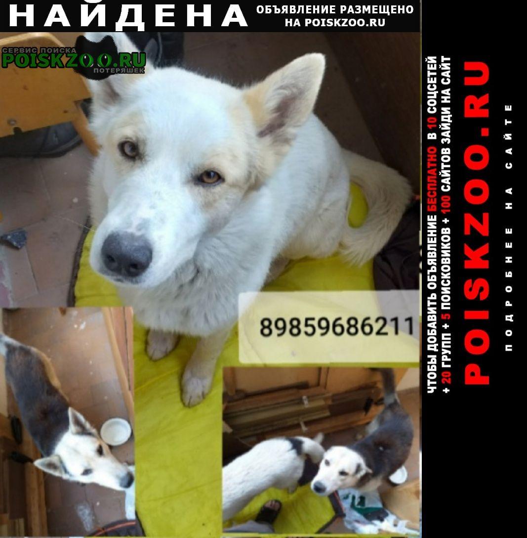 Найдена собака кобель два молодых кобеля Раменское
