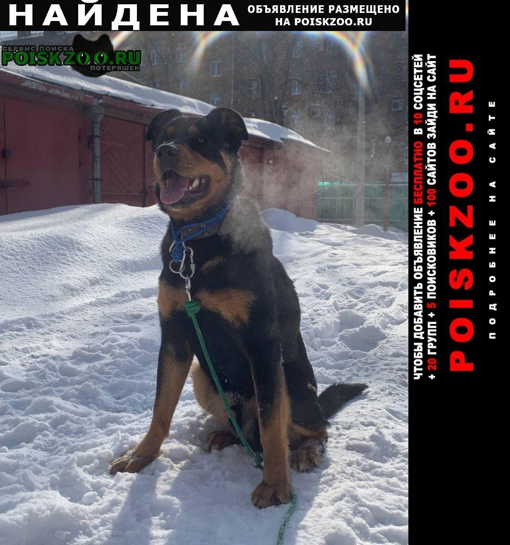 Найдена собака кобель ищу хозяина старого или нового Москва