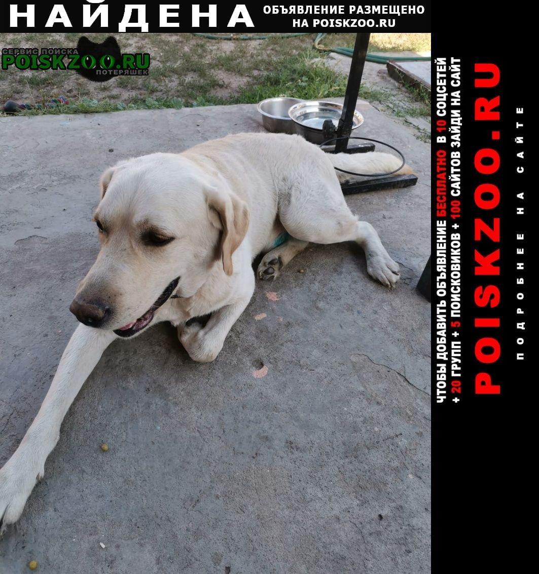 Найдена собака кобель молодой Старый Оскол