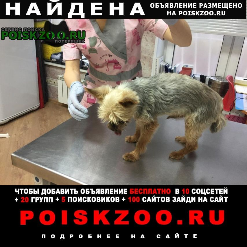 Найдена собака кобель Видное