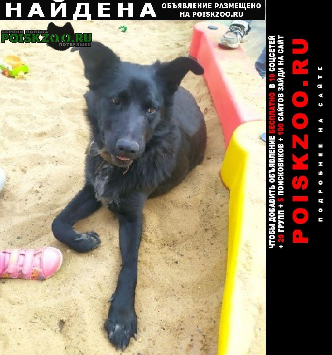 Найдена собака взрослая большая девочка Реутов