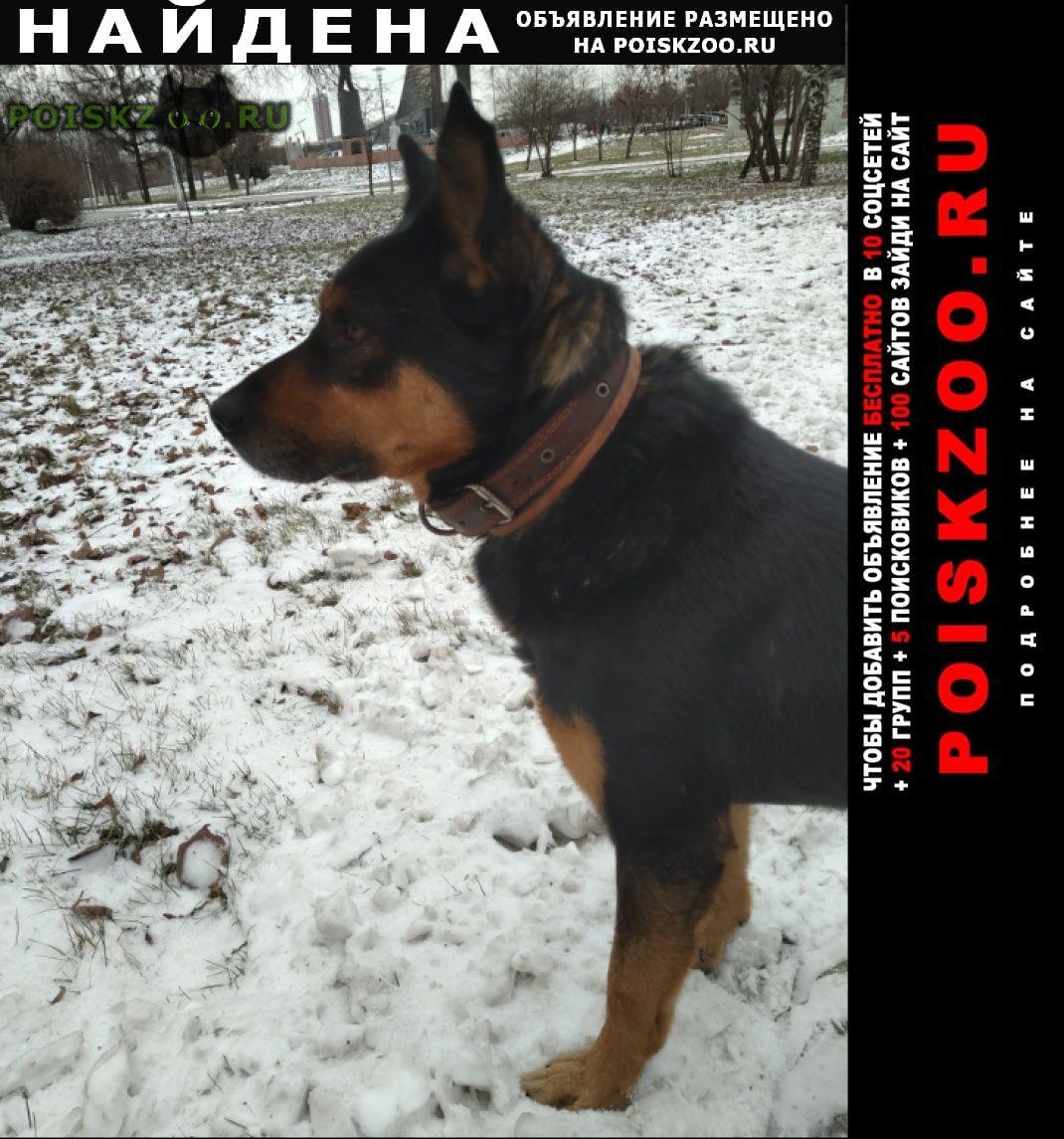 Найдена собака кобель. коричневый-черный г.Москва
