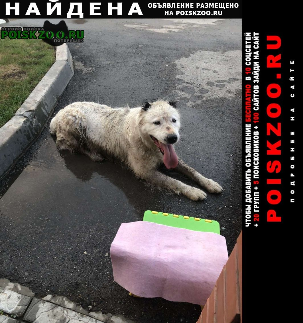 Найдена собака. похож на алабая Самара