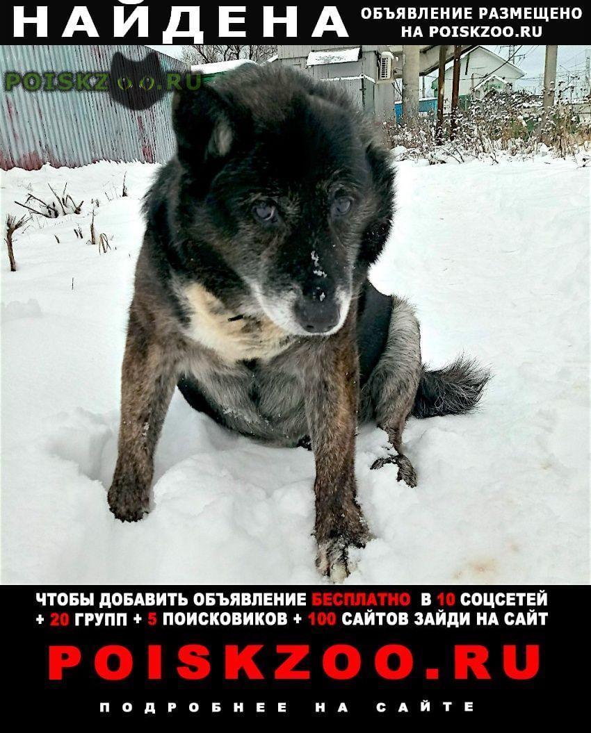 Найдена собака 12.01 черный пес округ одинцово г.Кубинка