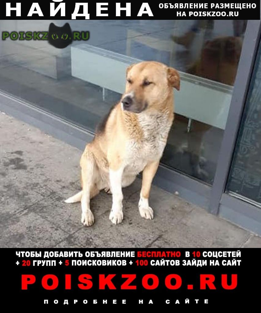 Найдена собака кобель зао пр-т вернадского рыжий г.Москва