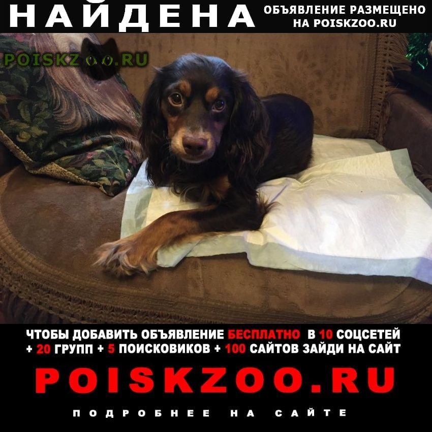 Найдена собака кобель 14.01 отрадное спаниель г.Москва
