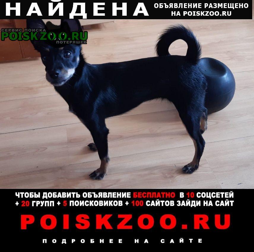 Найдена собака, в пятницу в 8.30 на жби мжк Екатеринбург