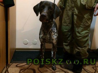 Найдена собака кобель г.Смоленск