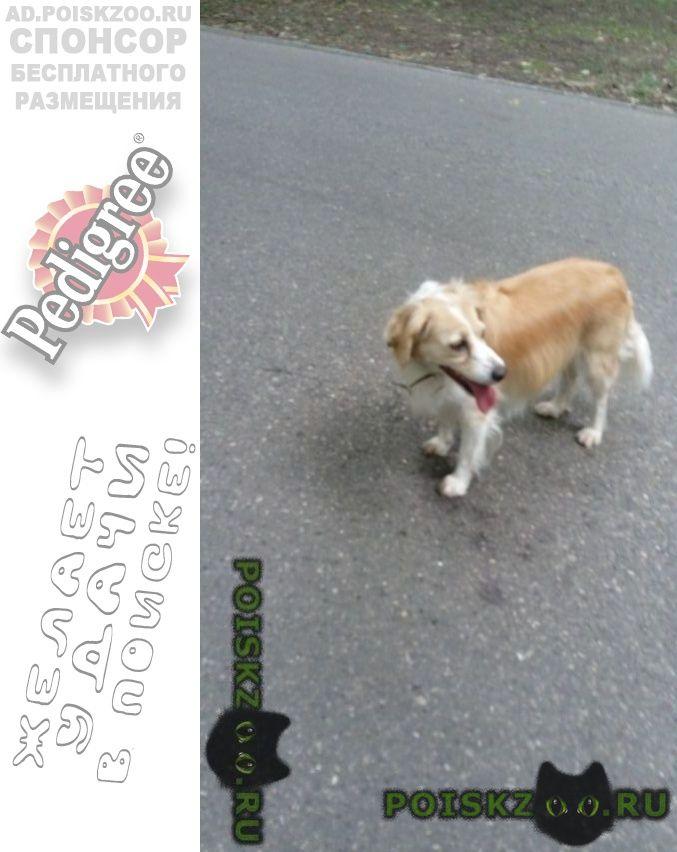 Найдена собака быстрее ищите, задержка опасна    г.Пятигорск