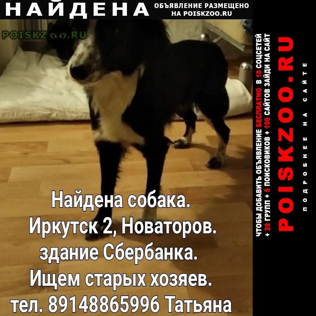Найдена собака ниже колена. девочка г.Иркутск