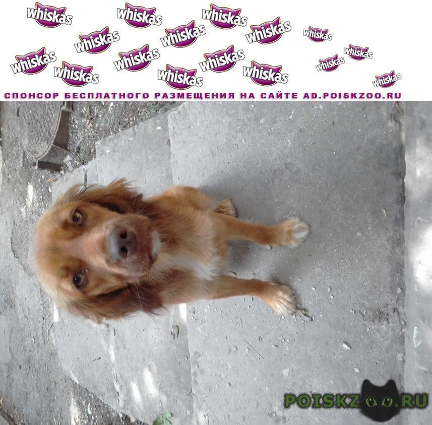Найдена собака в дивноморске рыжая собачка г.Геленджик
