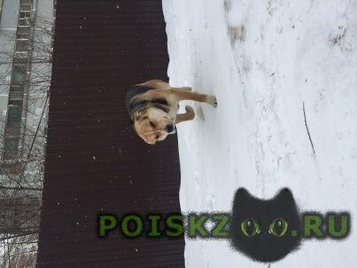 Найдена собака кобель г.Реутов