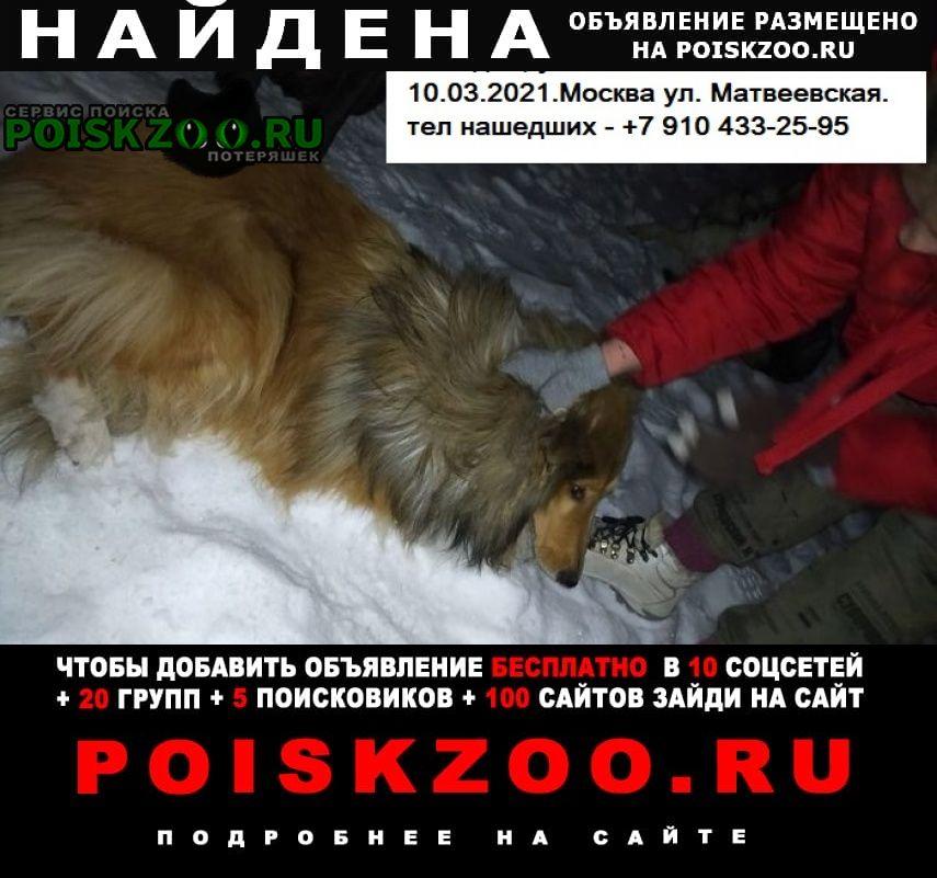 Найдена собака кобель колли мальчик Москва